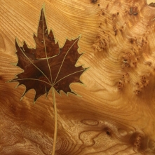 Maple leaf table with shelf - inlaid leaf